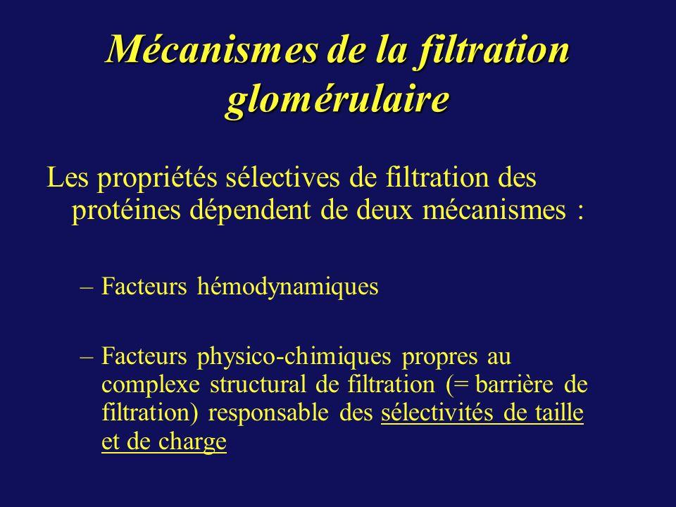 Mécanismes de la filtration glomérulaire