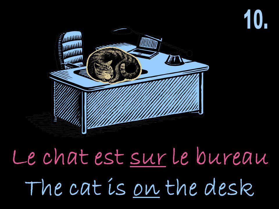 Le chat est sur le bureau