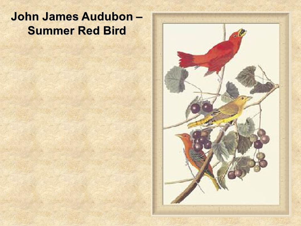 John James Audubon – Summer Red Bird