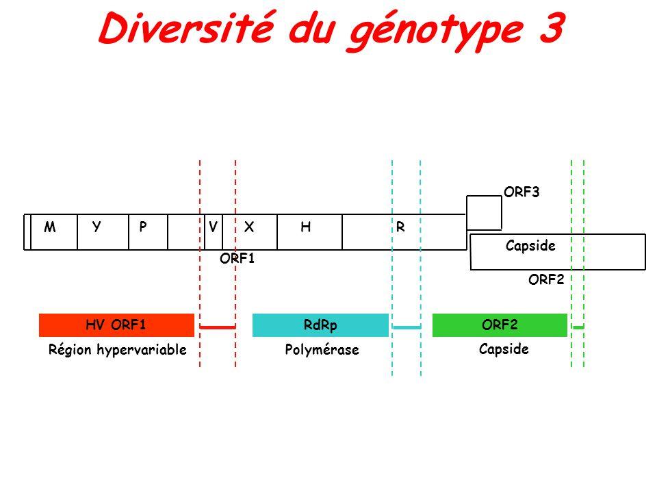 Diversité du génotype 3 ORF3 M Y P V X H R Capside ORF1 ORF2 HV ORF1