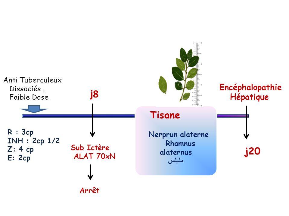 j20 Encéphalopathie Hépatique Tisane Nerprun alaterne Anti Tuberculeux