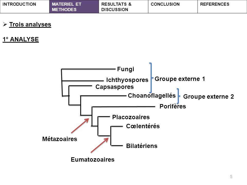 Trois analyses 1° ANALYSE Fungi Groupe externe 1 Ichthyospores