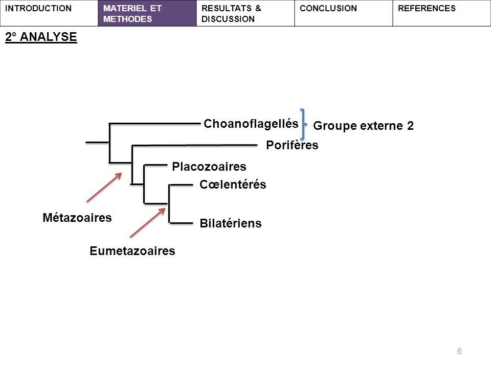 2° ANALYSE Choanoflagellés Groupe externe 2 Porifères Placozoaires