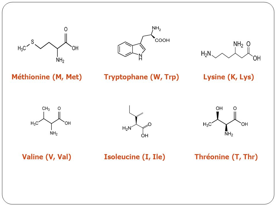 Méthionine (M, Met) Tryptophane (W, Trp) Lysine (K, Lys) Valine (V, Val) Isoleucine (I, Ile) Thréonine (T, Thr)