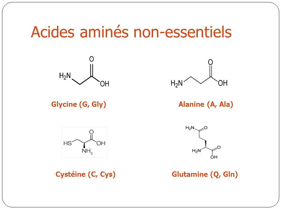 Acides aminés non-essentiels