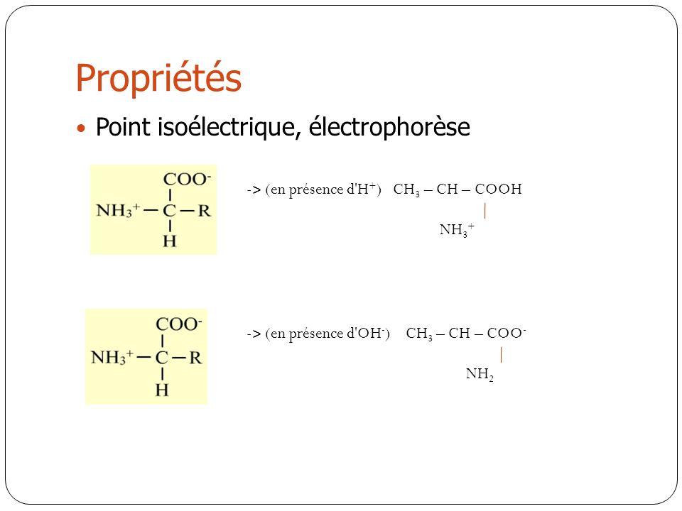 Propriétés Point isoélectrique, électrophorèse
