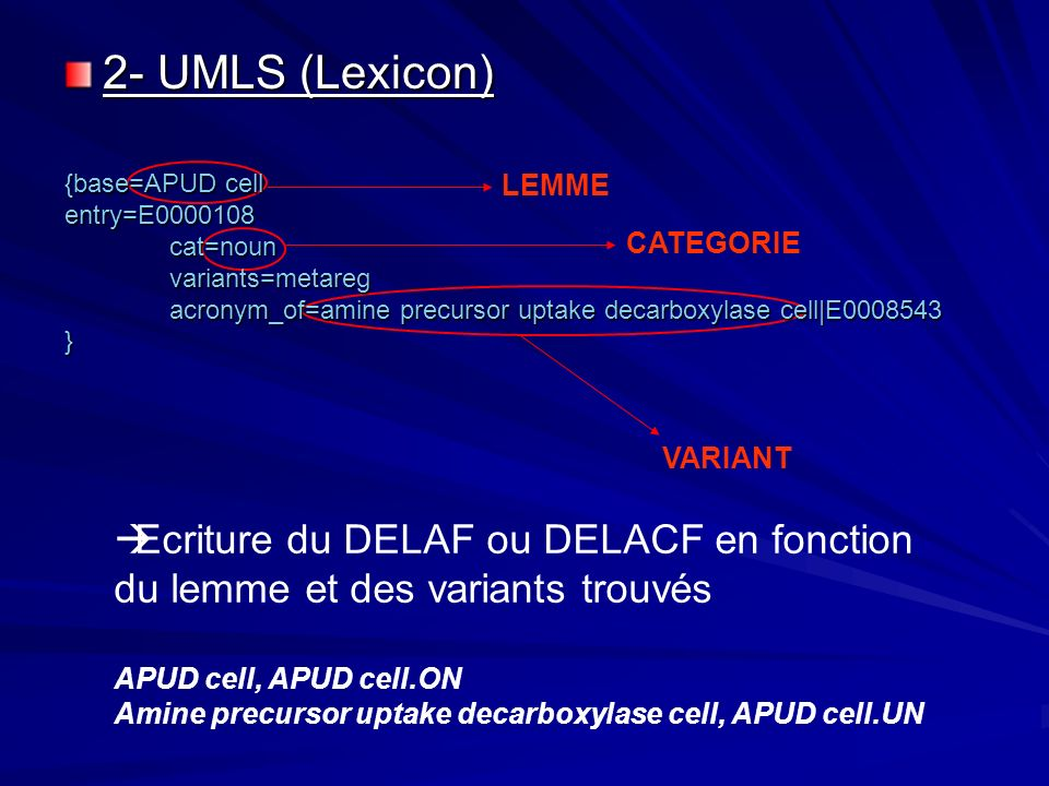 2- UMLS (Lexicon) {base=APUD cell. entry=E0000108. cat=noun. variants=metareg. acronym_of=amine precursor uptake decarboxylase cell|E0008543.