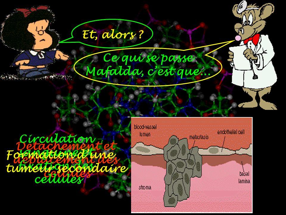 Et, alors Ce qui se passe. Mafalda, c'est que... Circulation. sanguine et. fixation des. cellules.