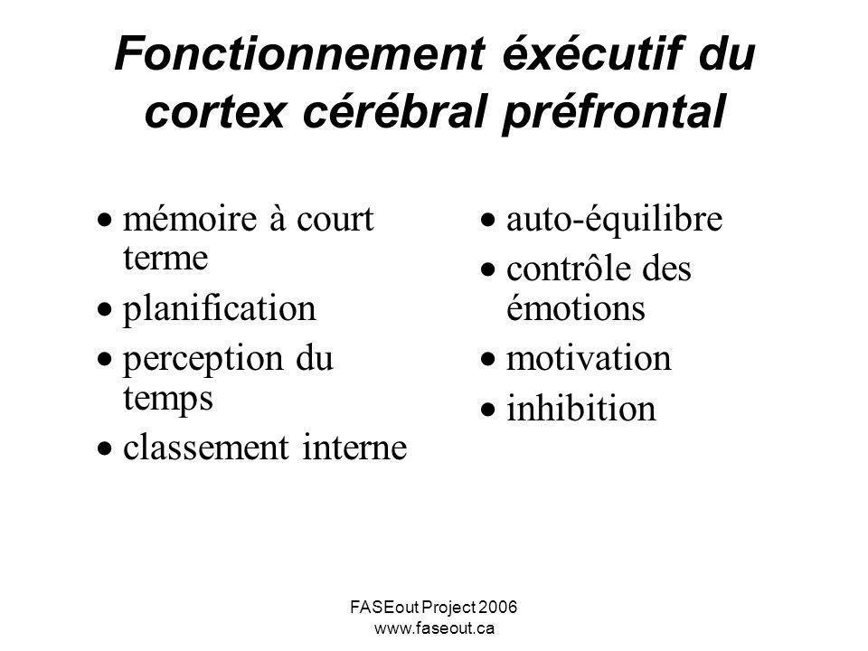 Fonctionnement éxécutif du cortex cérébral préfrontal