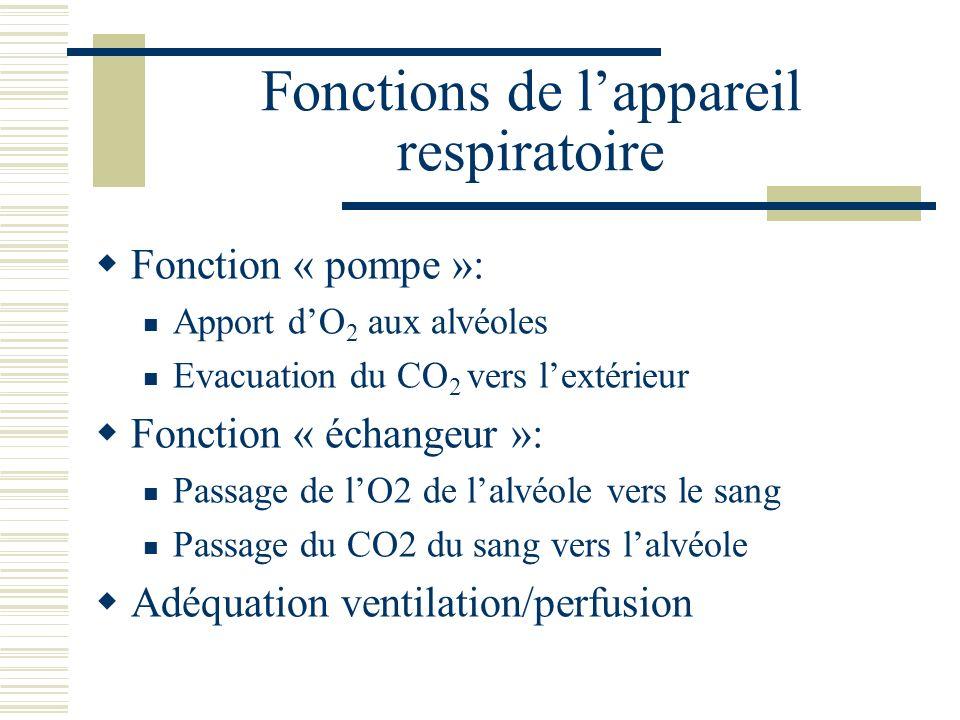 Fonctions de l'appareil respiratoire