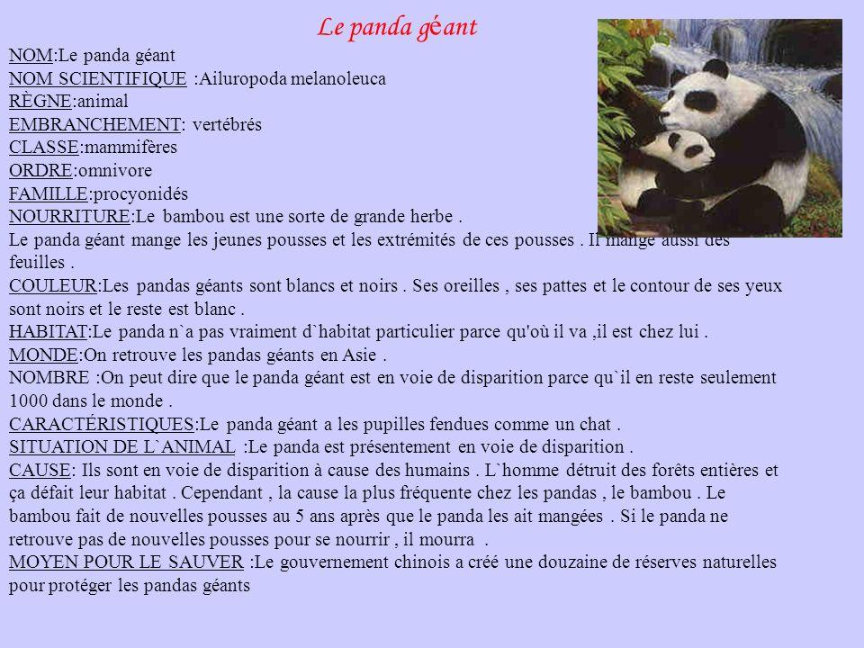 Le panda géant NOM:Le panda géant