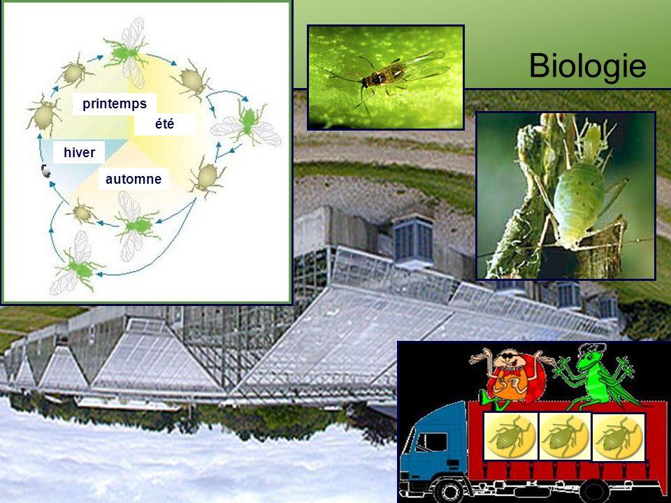 Biologie printemps été hiver automne
