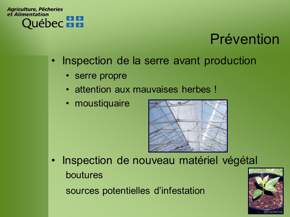 Prévention Inspection de la serre avant production