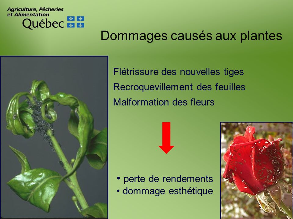 Dommages causés aux plantes