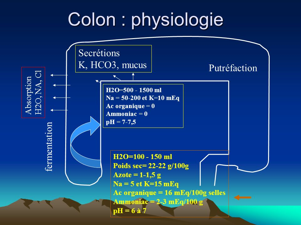 Colon : physiologie Secrétions K, HCO3, mucus Putréfaction