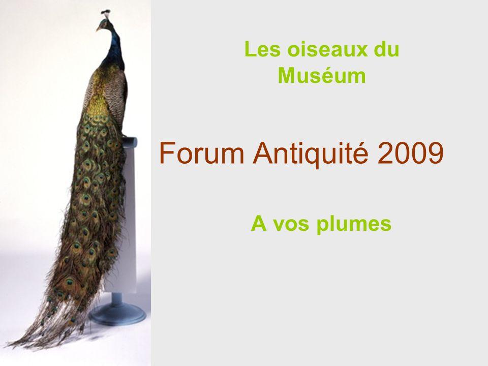 Les oiseaux du Muséum Forum Antiquité 2009 A vos plumes