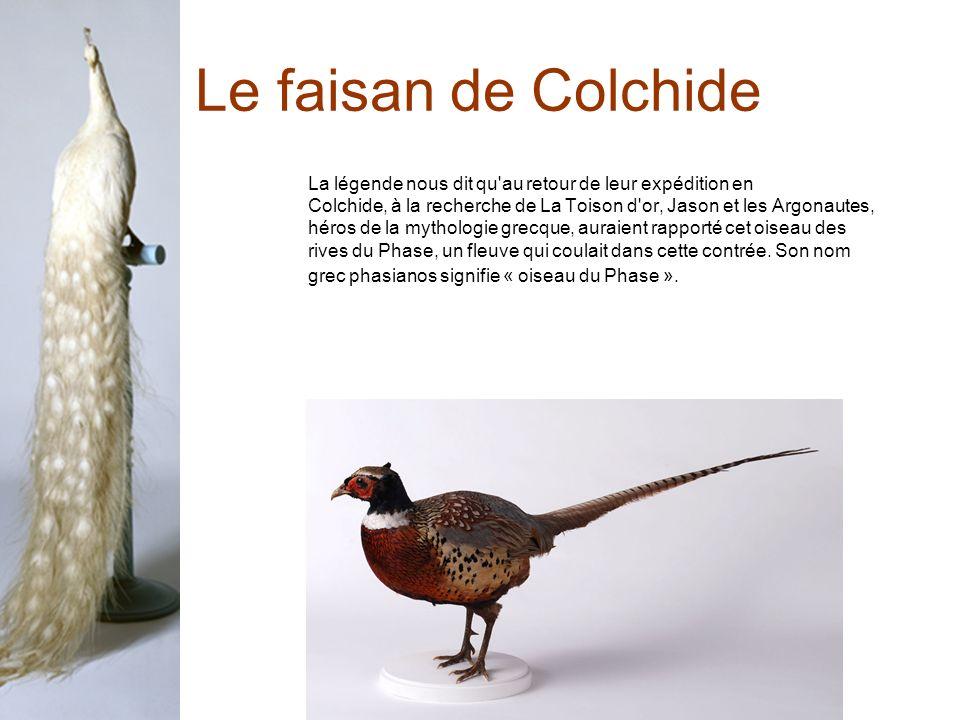 Le faisan de Colchide La légende nous dit qu au retour de leur expédition en. Colchide, à la recherche de La Toison d or, Jason et les Argonautes,