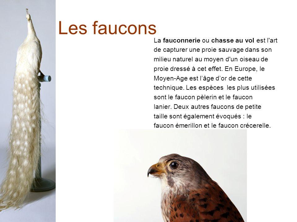 Les faucons La fauconnerie ou chasse au vol est l art