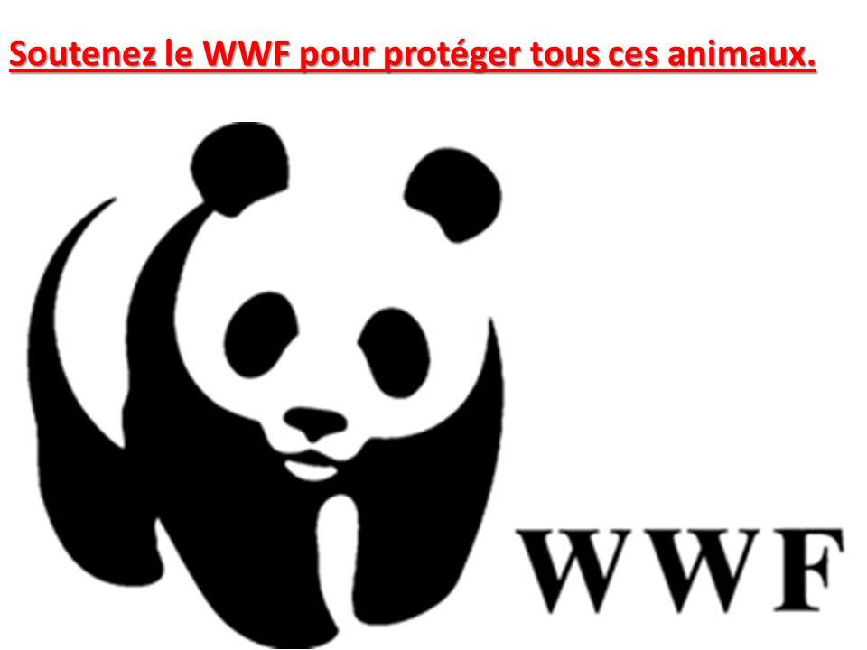 Soutenez le WWF pour protéger tous ces animaux.