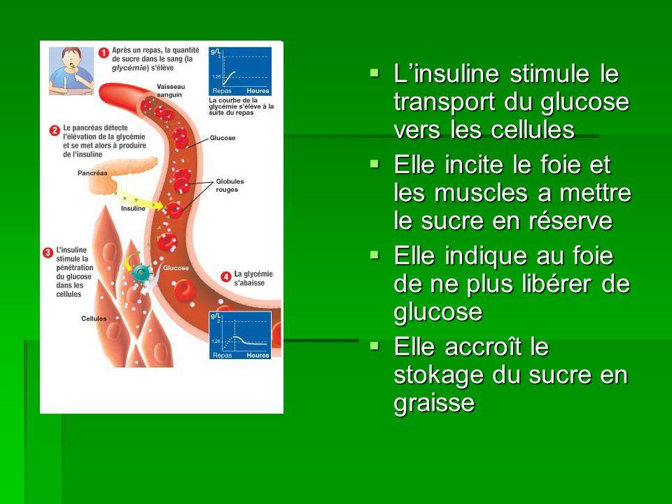 L'insuline stimule le transport du glucose vers les cellules
