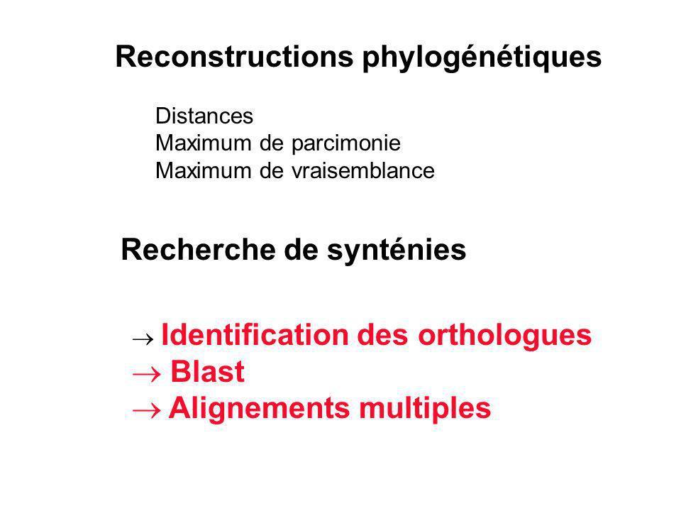 Reconstructions phylogénétiques