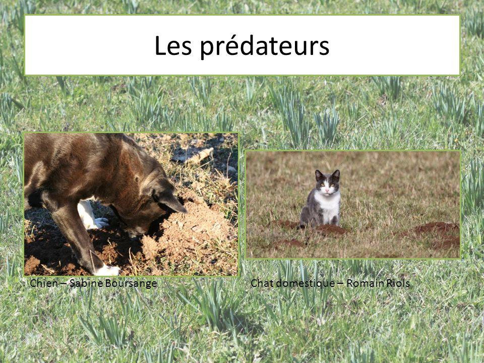Les prédateurs Chien – Sabine Boursange Chat domestique – Romain Riols