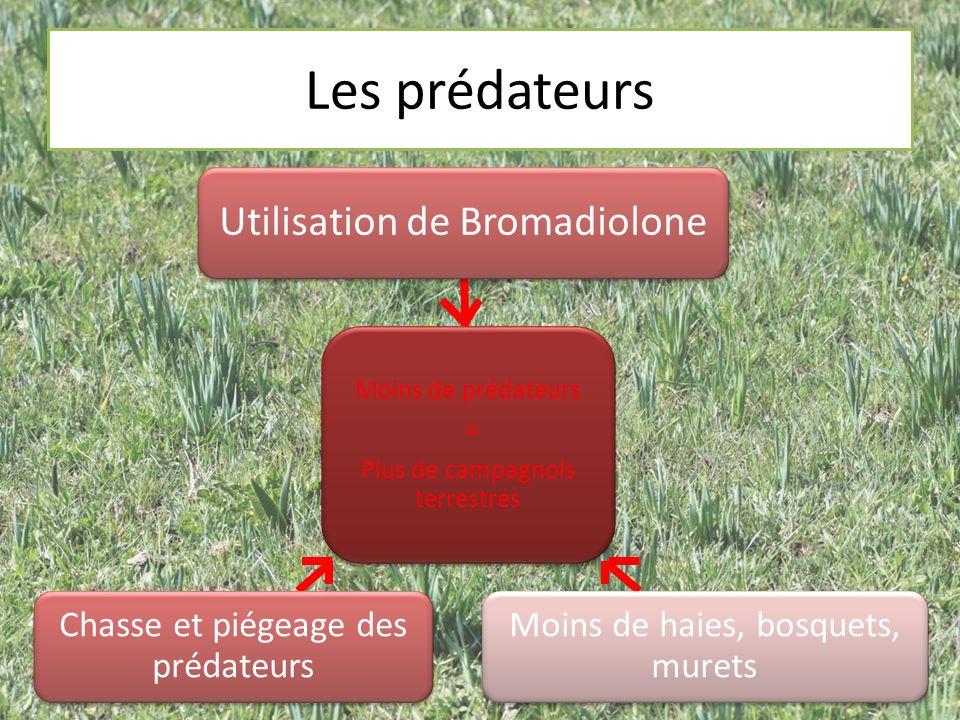 Les prédateurs Utilisation de Bromadiolone