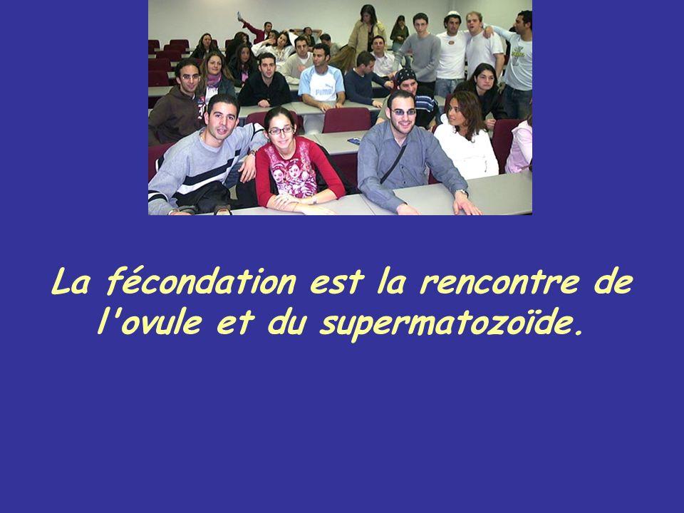 La fécondation est la rencontre de l ovule et du supermatozoïde.