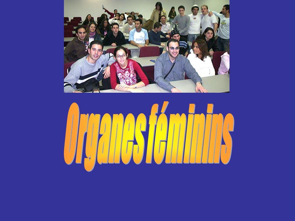 Organes féminins