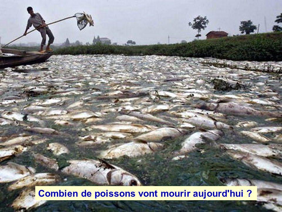 Combien de poissons vont mourir aujourd hui