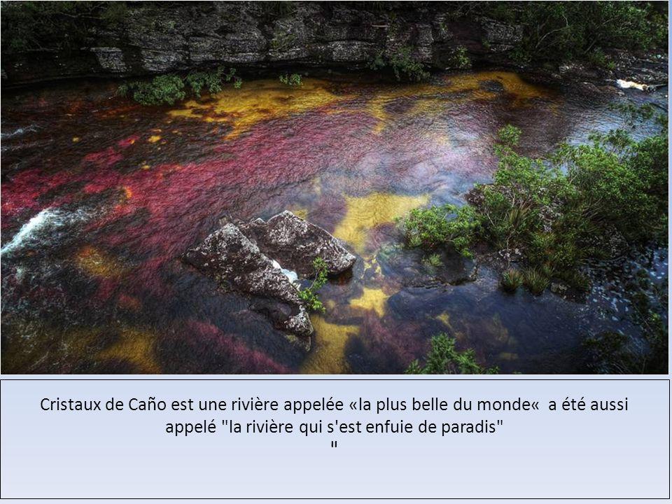 Cristaux de Caño est une rivière appelée «la plus belle du monde« a été aussi appelé la rivière qui s est enfuie de paradis