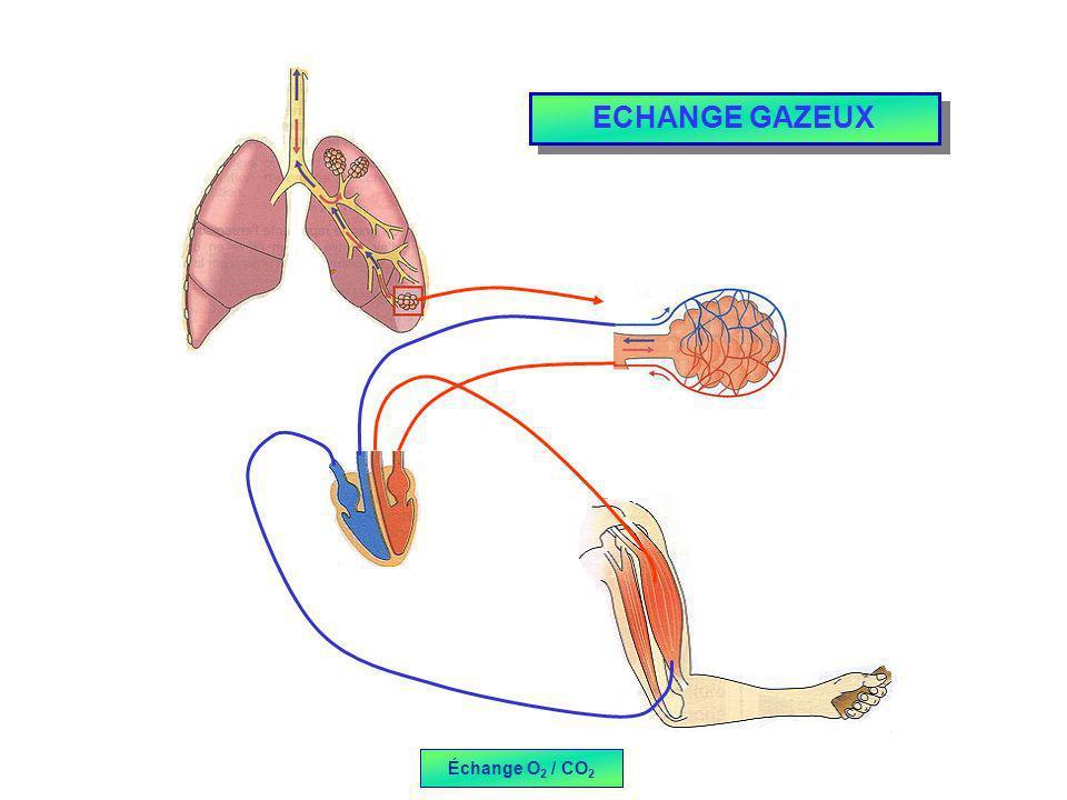 ECHANGE GAZEUX Échange O2 / CO2