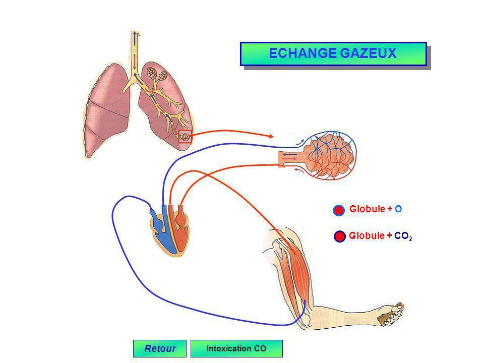 ECHANGE GAZEUX Globule + O Globule + CO2 Retour Intoxication CO