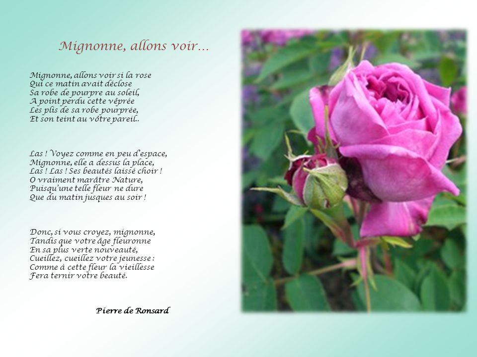 Mignonne, allons voir… Mignonne, allons voir si la rose