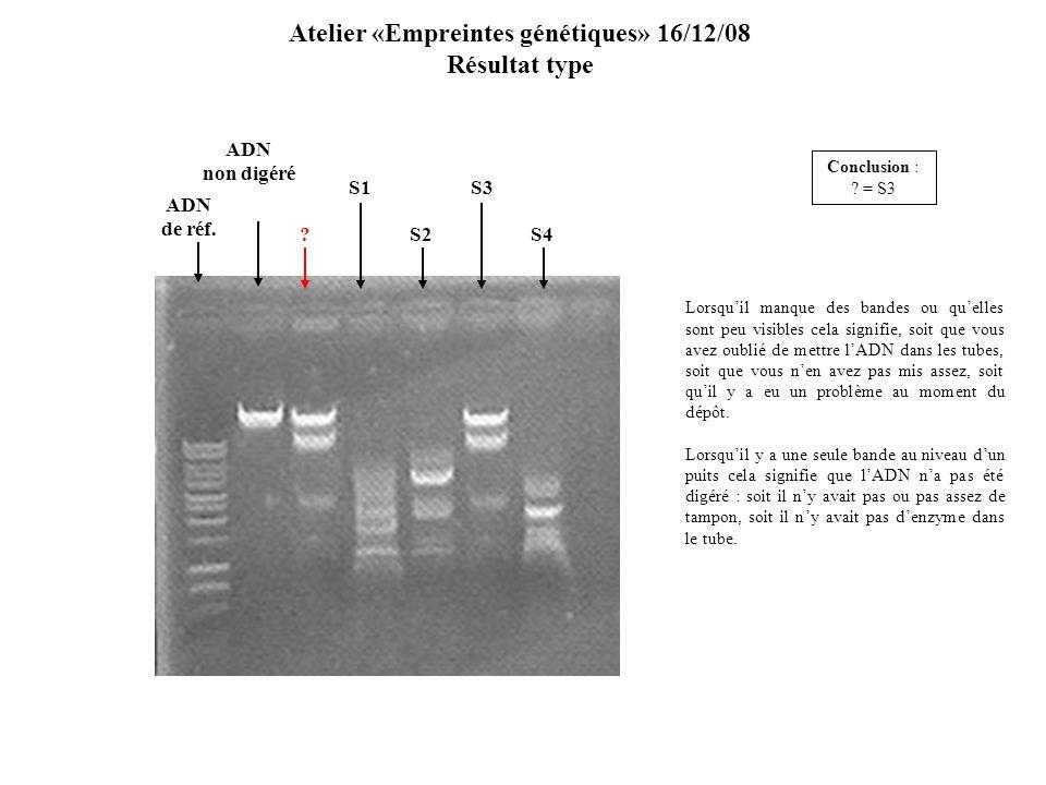 Atelier «Empreintes génétiques» 16/12/08