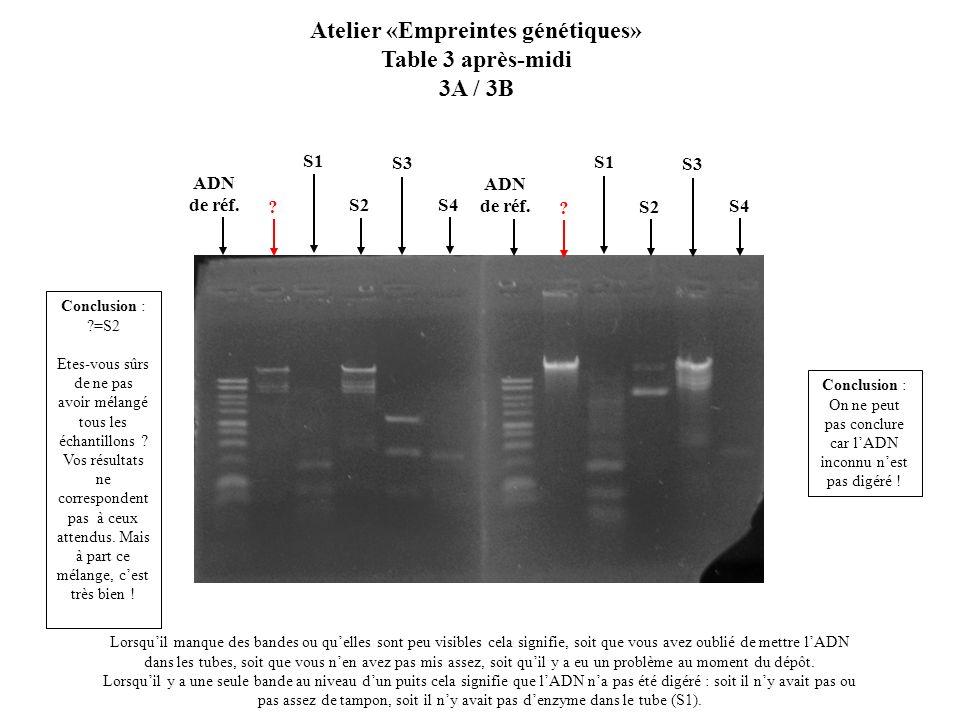 Atelier «Empreintes génétiques»