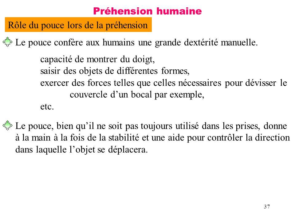 Préhension humaine Rôle du pouce lors de la préhension. Le pouce confère aux humains une grande dextérité manuelle.