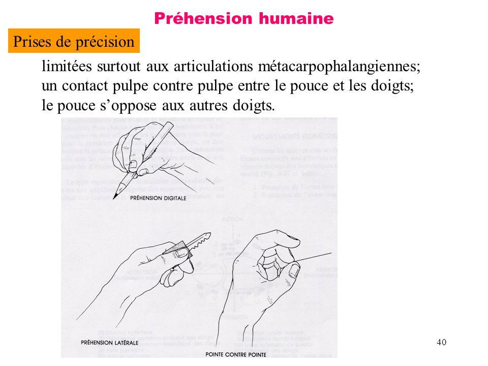 Préhension humaine Prises de précision. limitées surtout aux articulations métacarpophalangiennes;