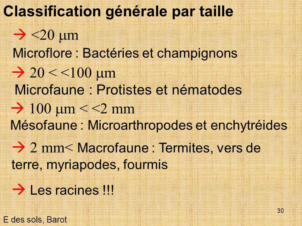 Classification générale par taille