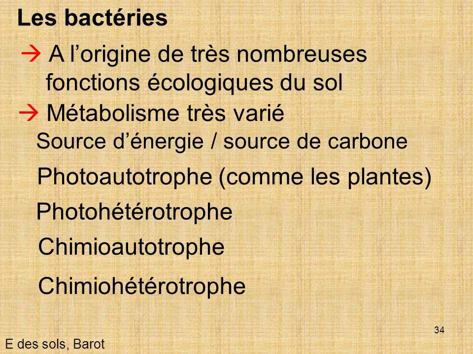  A l'origine de très nombreuses fonctions écologiques du sol