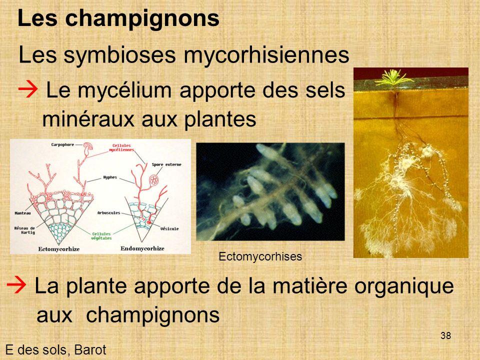 Les symbioses mycorhisiennes
