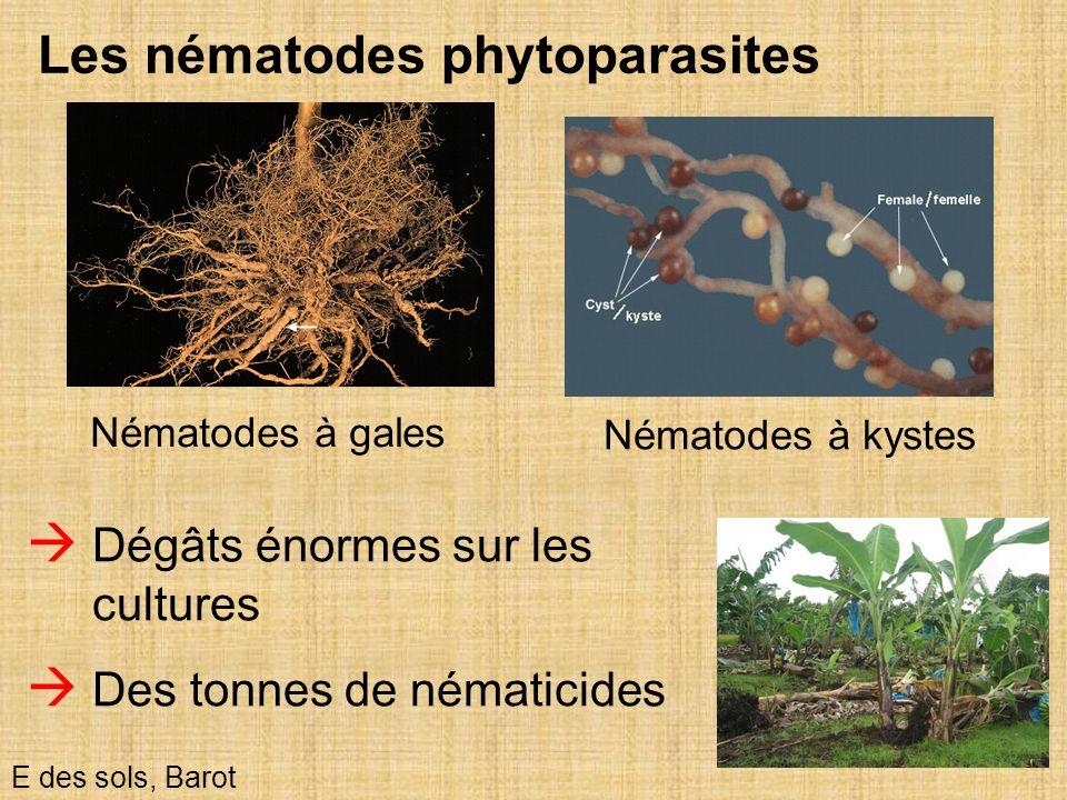 Les nématodes phytoparasites