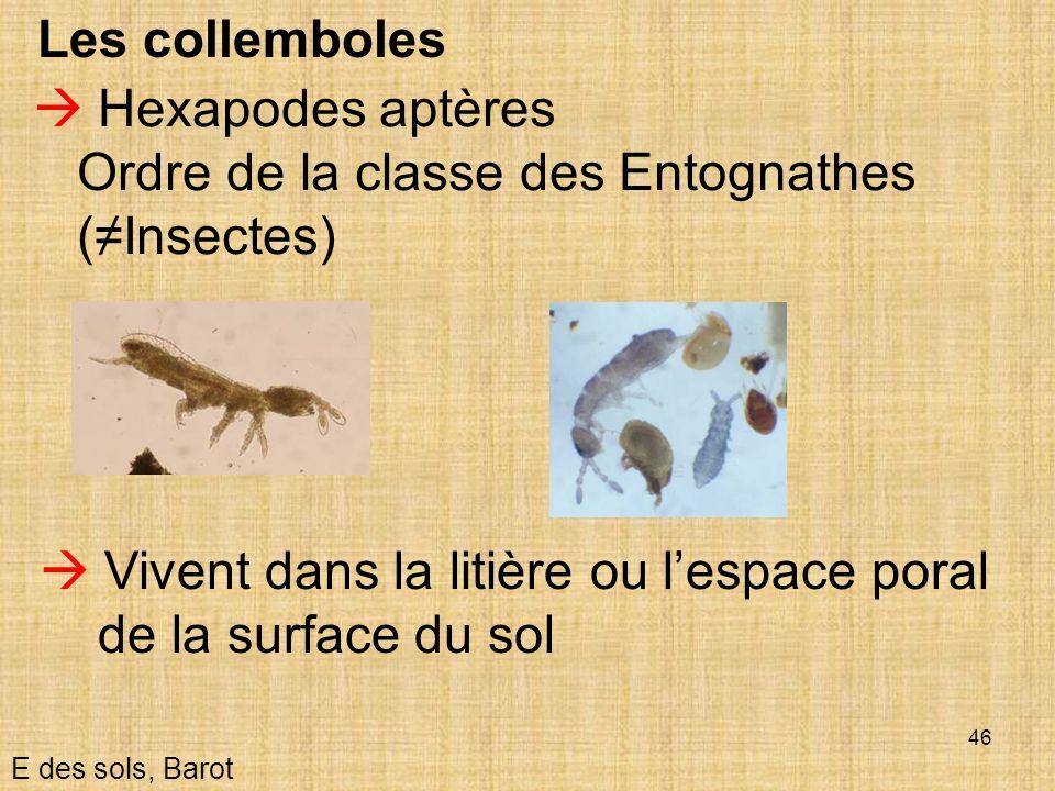 Ordre de la classe des Entognathes (≠Insectes)