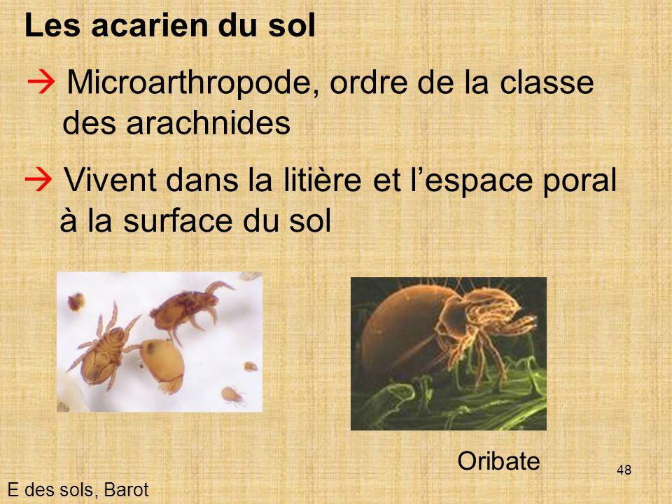  Microarthropode, ordre de la classe des arachnides