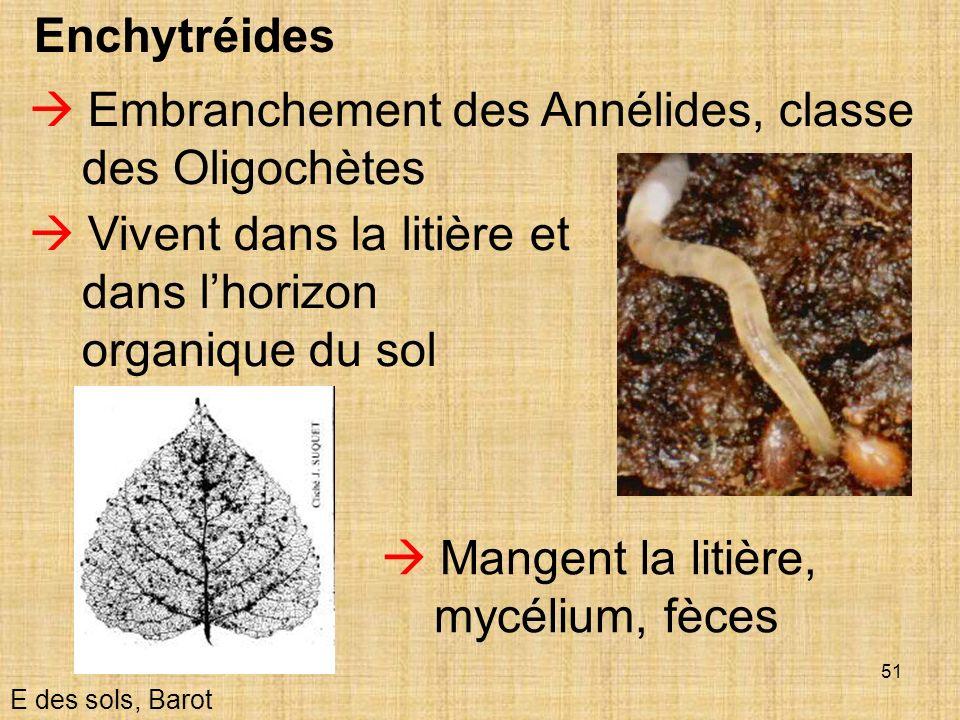  Embranchement des Annélides, classe des Oligochètes