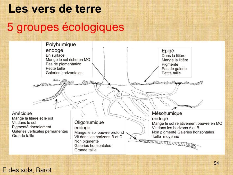 Les vers de terre 5 groupes écologiques E des sols, Barot