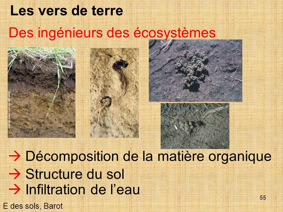 Des ingénieurs des écosystèmes