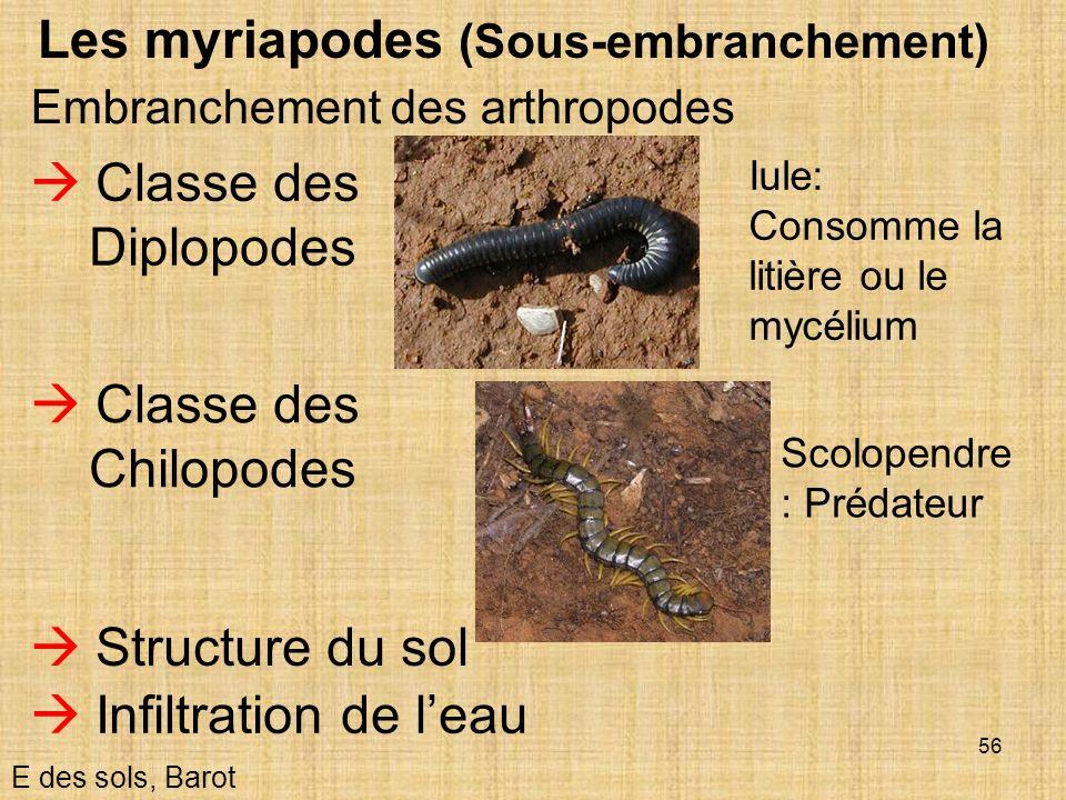 Les myriapodes (Sous-embranchement)