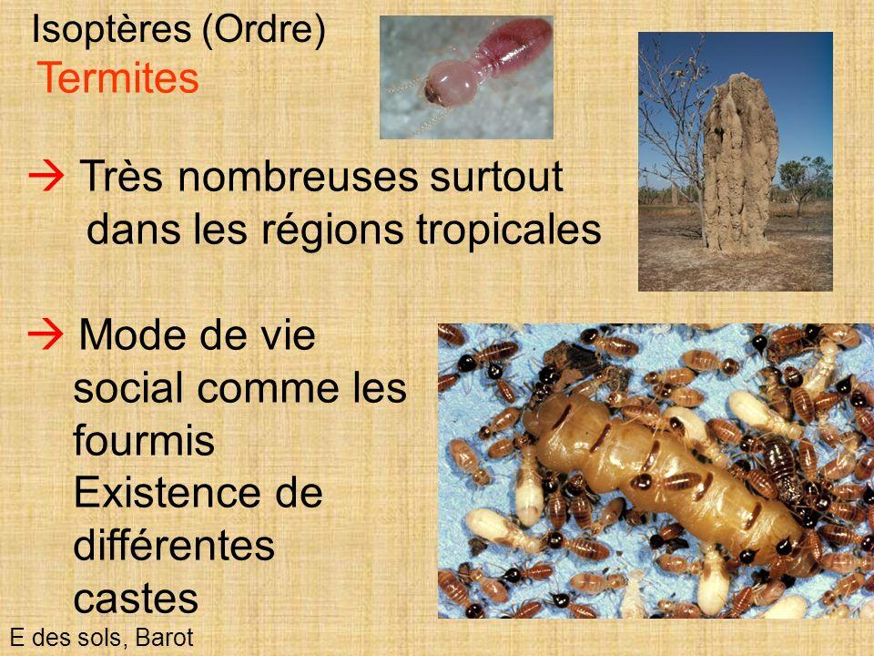  Très nombreuses surtout dans les régions tropicales