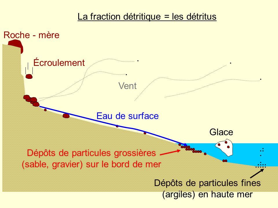 La fraction détritique = les détritus